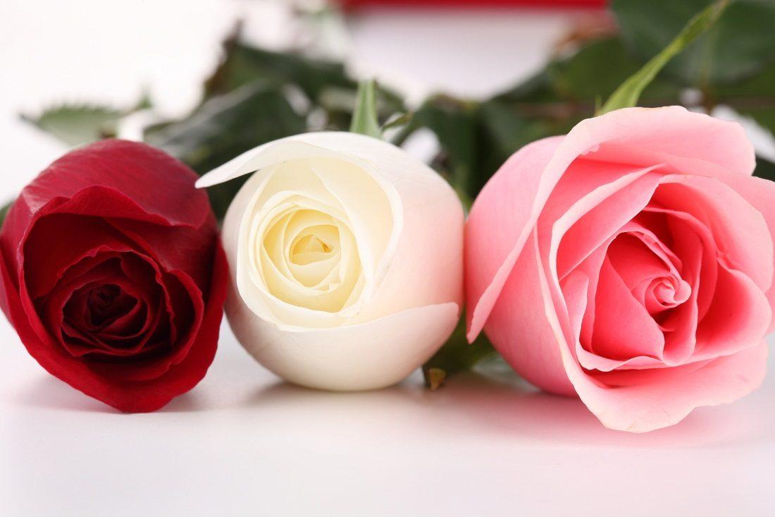 Resultado de imagen de Las rosas
